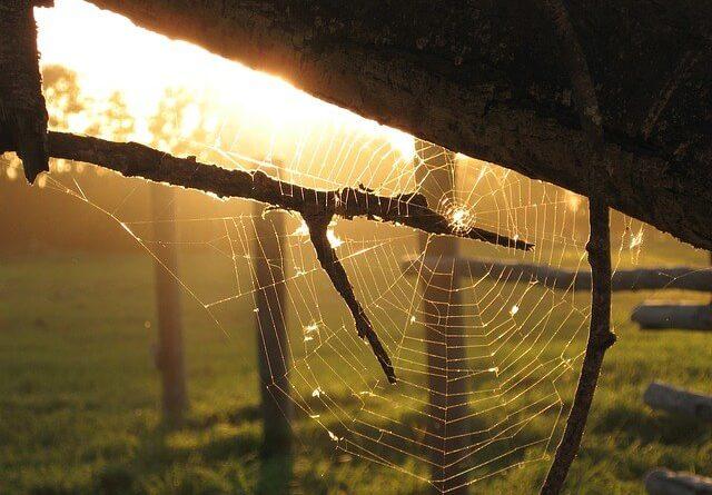 Pavouk s pavučinou
