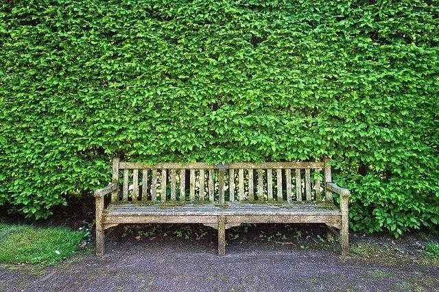 živý plot a lavička